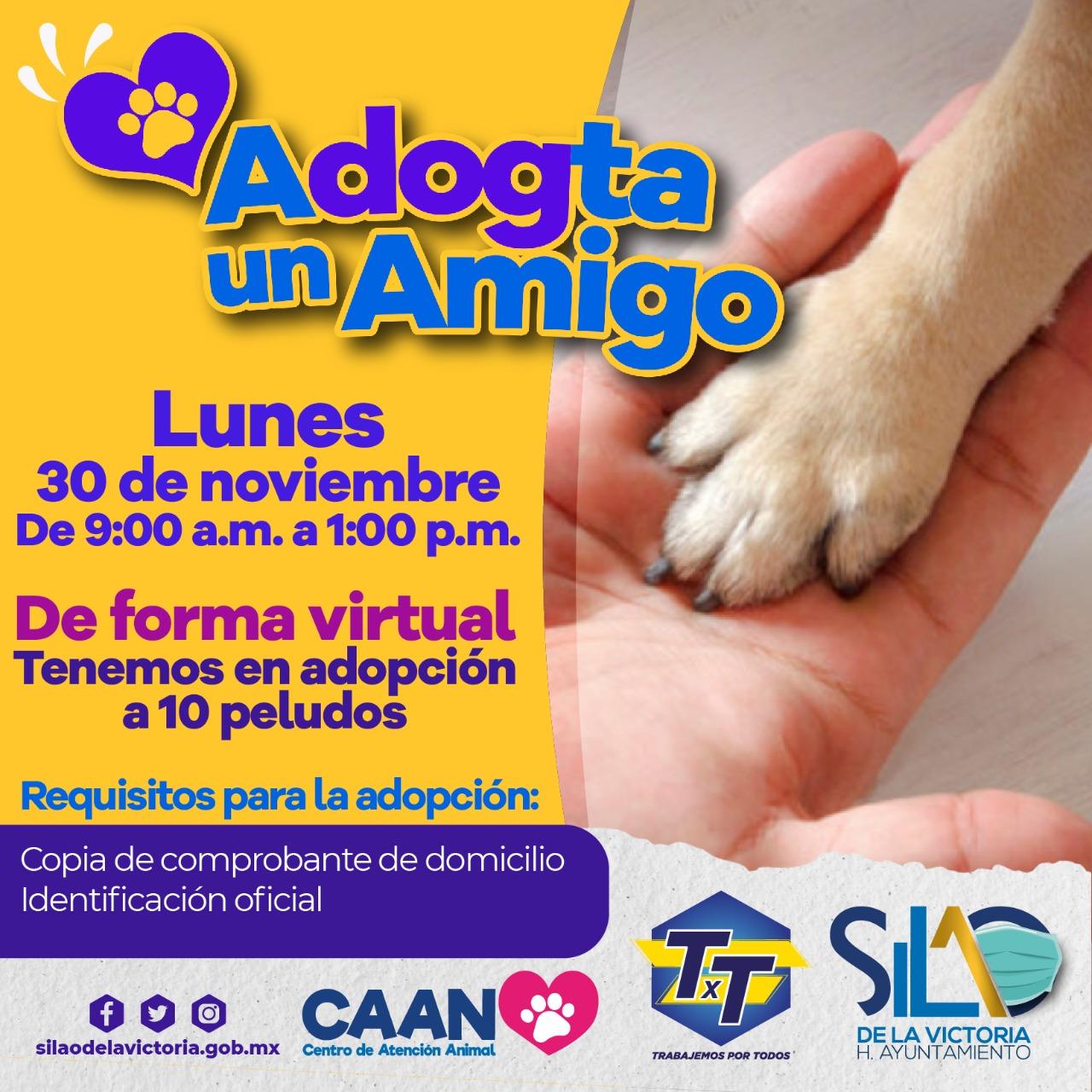 Invitan a participar en campaña de adopción canina