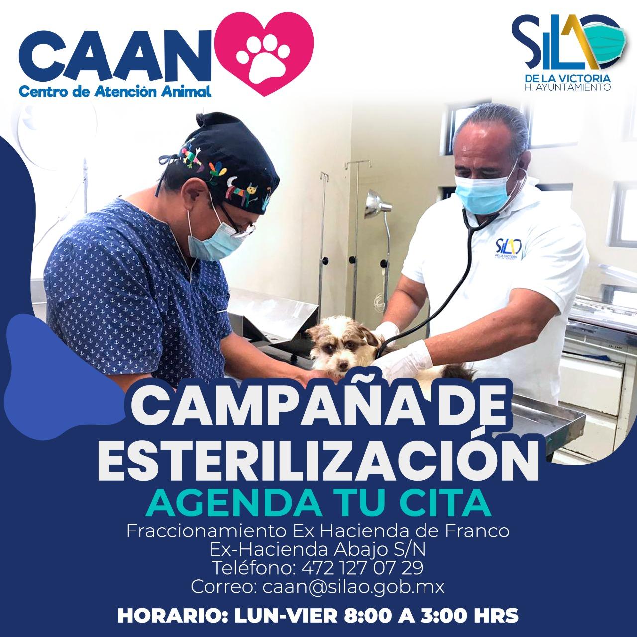 EL CAAN arranca con campaña de esterilización de perros y gatos