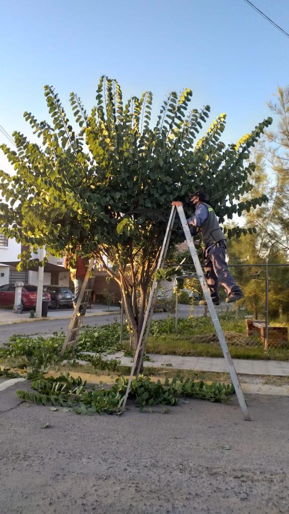 Mantenimiento de alumbrado y limpieza de áreas verdes, una tarea incansable